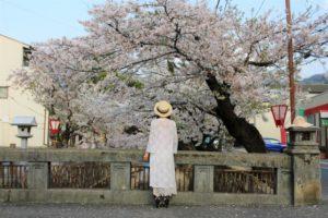 桜まつり鶴舞公園中止