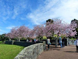 荒子川公園桜まつり